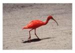 Ptice05
