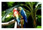 Ptice06