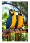 Ptice08