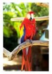Ptice09